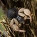 Pseudoescorpiones - Photo (c) Alice Abela, todos los derechos reservados