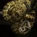 Bothrops punctatus - Photo (c) Sebastian Di Domenico, todos los derechos reservados