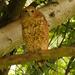 Scotopelia peli - Photo (c) David Beadle, todos los derechos reservados, uploaded by dbeadle
