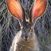 Liebres Y Conejos - Photo (c) Greg Shchepanek, todos los derechos reservados