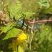 Stenophyllia modesta - Photo (c) Bernardo Segura Silva, todos los derechos reservados