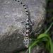San Lucan Gecko - Photo (c) Gerardo Marrón, all rights reserved