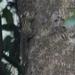 Paraxerus alexandri - Photo (c) David Beadle, todos los derechos reservados, uploaded by dbeadle