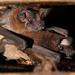 Murciélago Cola Suelta Ancha - Photo (c) Carlos N. G. Bocos, todos los derechos reservados