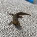 Sphaerodactylus macrolepis grandisquamis - Photo (c) Ali, todos los derechos reservados