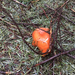 Lactarius subviscidus - Photo (c) Liz, todos los derechos reservados