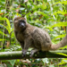 Greater Bamboo Lemur - Photo (c) M. Omick, all rights reserved