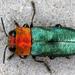 Metallic Wood-boring Beetles - Photo (c) gernotkunz, all rights reserved