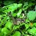 Heteromallus spina - Photo (c) Francisco Rivas, todos los derechos reservados