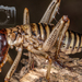 Hawke's Bay Tree Weta - Photo (c) Danilo Hegg, all rights reserved