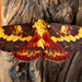 Citheronia laocoon - Photo (c) charlesrasouza, all rights reserved