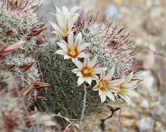 84 Gambar Alam Benda Dan Flora Paling Keren