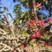 Fuchsia lycioides - Photo (c) Benjamín Jacques, כל הזכויות שמורות