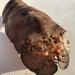 Langosta Pantufla - Photo (c) Grant Law, todos los derechos reservados