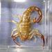 Stahnkeus subtilimanus - Photo (c) Jay Keller, all rights reserved, uploaded by Jay L. Keller