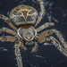 Grey Cross Spider - Photo (c) Jon, all rights reserved