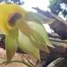 Catasetum - Photo (c) Mequiel Zacarias Ferreira, all rights reserved