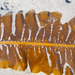 Winged Kelp - Photo (c) Wendy Feltham, all rights reserved
