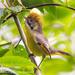 Actinodura strigula - Photo (c) Ben, todos los derechos reservados