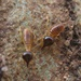 Nasutiform Termites - Photo (c) designonze, all rights reserved, uploaded by Gabriela Castro