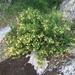 Orange Bush Monkeyflower - Photo (c) DCStokes, all rights reserved