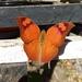 Fountainea glycerium cratais - Photo (c) Martina Arias, כל הזכויות שמורות