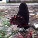 Mimoides thymbraeus thymbraeus - Photo (c) Gabriela Díaz, todos os direitos reservados