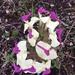 Pedicularis - Photo (c) angelalhagang, todos los derechos reservados