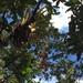 Racinaea tetrantha - Photo (c) naisla, todos os direitos reservados