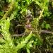 Liometopum sinense - Photo (c) Gao Fan, todos los derechos reservados