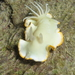 Ardeadoris egretta - Photo (c) Bart, all rights reserved, uploaded by BJ Smit