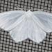 Eugonobapta nivosaria - Photo (c) Ian Davies, כל הזכויות שמורות