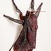 Acharia horrida - Photo (c) Stéphane De Greef, todos los derechos reservados