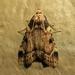 Aglossa costiferalis - Photo (c) John Ratzlaff, todos los derechos reservados, uploaded by J. Allen Ratzlaff