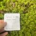 Sphagnum missouricum - Photo (c) Téa Burdine, todos los derechos reservados