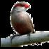 Aves Península Ibérica icon