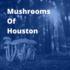 Mushrooms of Houston icon