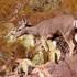 Biodiversidad de Durango y Zacatecas, Centro de Ecologia Regional AC icon
