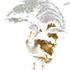 TMNHA Tamborine Mountain Species Data icon