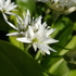Flora UOL SoSe 2021 (Uwi A) icon