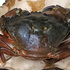Green Crab in Heiltsuk Territory icon