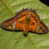 Neotropical butterflies icon