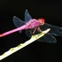 Dragonflies and Damselflies of Honduras icon