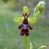 Orquídies dels Països Catalans icon