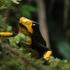 Anfibios y reptiles del departamento de Risaralda icon