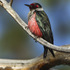 Oregon Birds icon