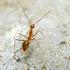 Ants of the Big Island of Hawaii icon