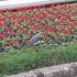 Aves de Curitiba icon