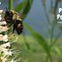 Parks for Pollinators - Kent County, Michigan icon