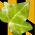 Baltimore Non-Native Invasive Plants icon